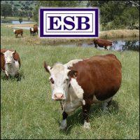 Upgraded mobile friendly website for Everitt Seeley & Bennetts